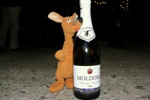 Ryjek w Moldawii
