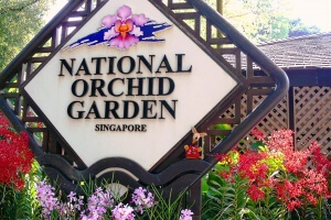 Ryjek wśród orchidei