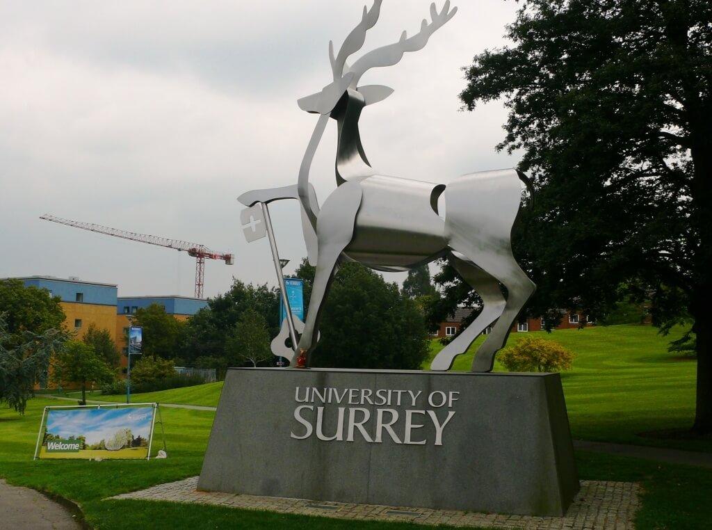 Ryjek i Jeleń @ University of Surrey