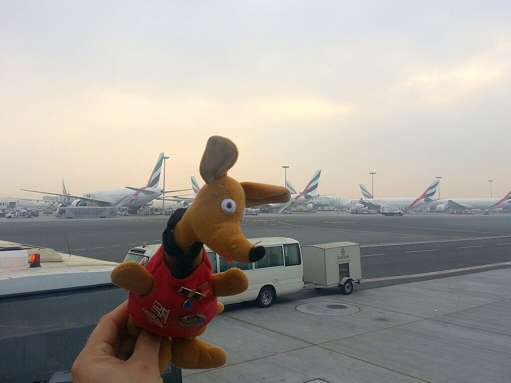 Ryjek na lotnisku w Dubaju