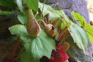 Ryjek i tajemnicza roślina